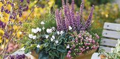 Medzi veľmi vďačné rastliny, ktoré môžeme pestovať v balkónových debničkách počas celého roka, patria vresy a vresovce. Neprekáža im ani sneh a mráz.