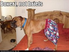 Boxers, Not Briefs =-}