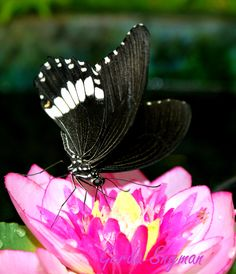 Butterfly World, Cape Town.