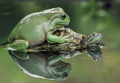 Este fotógrafo retrata a las ranas como nunca antes habías visto
