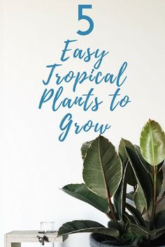 How to successfully grow tropical plants indoor and the 5 easiest plants to get you started.