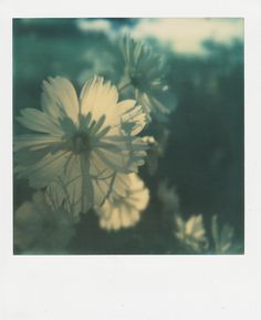 polaroid flowers