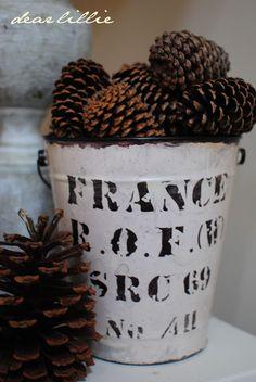 Pine cones in a bucket