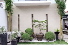 Nearly every part of the spacious garden is filled with various plants.