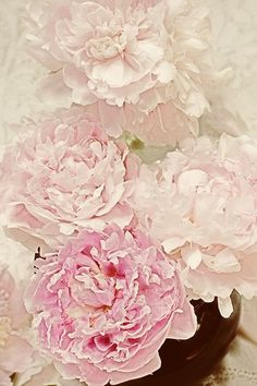 Gorgeous! Peonies my fav!!! Lovely pic on etsy..http://www.etsy.com/shop/JudyStalus?ref=seller_info
