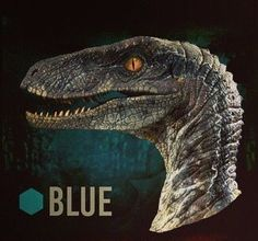 blue raptor jurassic world | Blue is a grayish blue and has blue streaks going down from head to ...