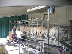 10-goat milking parlor