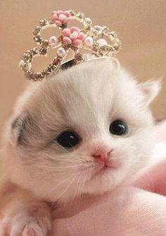 <3 ~ ALL Things {WHITE} ~ <3  *adorable white kitten with tiara- little princess <3