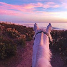 That's what life is all about 💜 - # dream # it # is # life - Pferde - Animals Cute Horses, Pretty Horses, Horse Love, Beautiful Horses, Animals Beautiful, Horse Photos, Horse Pictures, Cute Baby Animals, Animals And Pets