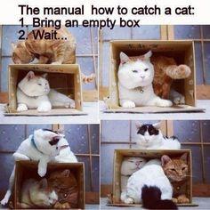Hoeveel katten passen er in een doos