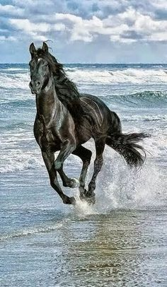 Photo: Very beautiful horse #beautiful Horse pretty amazing, lovely Love one another, God in Nature #dance #Shakira #Beautiful #horses   Simply.............Peace...............Peace...............Peace.................Love............Love......Soul...........Happiness Peace love for all......for World...........Empty your mind , be formless. Shapeless like Water.......Bruce Lee.  Spectacular view and Magical Beauty of the Victoria Falls Victoria sacred waterfall known as the water curtain…