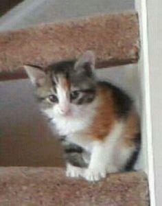 Floortje als kitten 2011