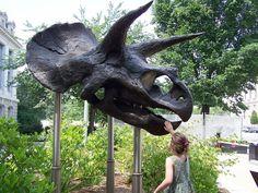 Réplique du crâne d'un Triceratops, entrée du Smithsonian National Museum of Natural History, USA. Auteur : Sabreguy29, 2007.