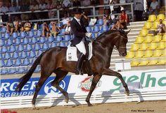 Poetin I Deutsches Sportpferd by Sandro Hit born 1997