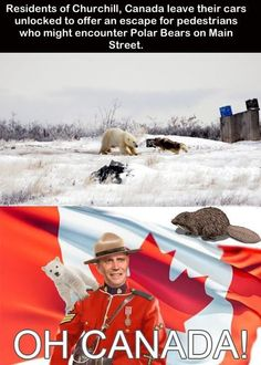 Funny pictures about Things that only happen in Canada. Oh, and cool pics about Things that only happen in Canada. Also, Things that only happen in Canada. Canadian Memes, Canadian Things, I Am Canadian, Canadian Humour, Canadian Facts, Canadian Culture, Funny Shit, The Funny, Funny Memes