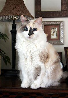Cat ~ Nuki