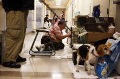 Hurricane Sandy and pets