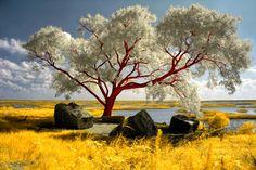 Red Beach Tree by =helios-spada on deviantART