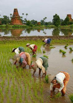 Este #verano2014 descubre #Myanmar desde 2.615€