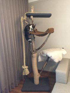 Diy Cat Scratching Post, Cat Heaven, Outdoor Cat Enclosure, Cat House Diy, Diy Cat Tree, Cat Towers, Dog Furniture, Felix The Cats, Outdoor Cats
