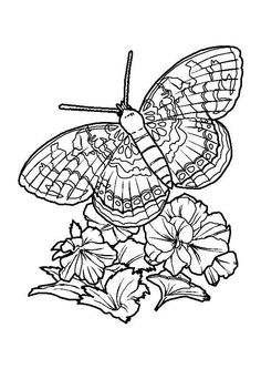 Coloriage Fleur Insecte.154 Meilleures Images Du Tableau Coloriage De Papillons Et Autres
