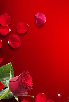 Love Wallpapers Romantic, Beautiful Flowers Wallpapers, Beautiful Nature Wallpaper, Love Wallpaper Backgrounds, Framed Wallpaper, Flower Backgrounds, Beautiful Love Images, Beautiful Flowers Pictures, Rose Flower Wallpaper
