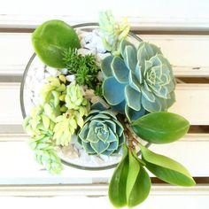 Vaso Gilberto: vista aérea  #oitominhocas #suculentas #suculovers #decoração #plantinhas #ecofriendly #verde #presentecriativo #elo7br