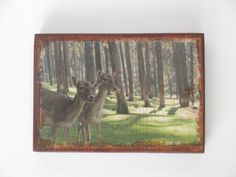 Deer picture, deer decor, deer wall art, photo transfer on wood, wall art, photo plaque, picture on wood, nature decor, deer nursery decor by HearttoCraft on Etsy