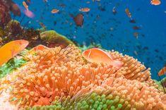 Coral reef and fish underwater at south west pinnacle Koh tao Thailand Phuket Travel Guide, Thailand Travel Tips, Bangkok Travel, Visit Thailand, Best Beaches In Phuket, Best Places In Bangkok, Best Rooftop Bars, Pattaya Thailand, Koh Samui