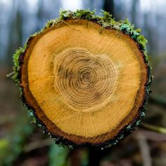 A different kind of solar article. Evidence of ancient solar storms is locked up in tree rings Pte Academic, Ocean Activities, Out Of The Woods, Lock Up, Tree Rings, Tree Patterns, Greenhouse Gases, Something To Do, Solar