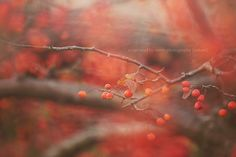 For humans, autumn is a time of harvest, of gathering together. For nature, it is a time of sowing, of scattering abroad. ~ Edwin Way Teale  Image by © Captured By Carrie Photography  http://www.facebook.com/CapturedByCarriePhotography