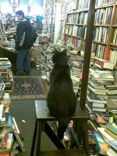 Books and cat. Reminds me the bookstores of Buenos Aires... There is always a cat ♡