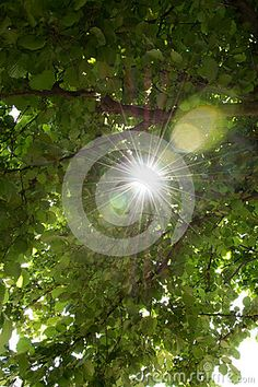 The beauty of the sun rays that emerge from the branches of the tree