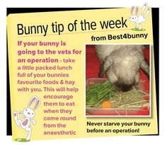 Bunny tip week 10 - If your bunny is going to the vets for an operation, take a packed lunch with you of your bunnies favourite foods!
