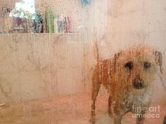Max Confined by Steve Dunning Framed Prints, Canvas Prints, Life Humor, Abstract Photography, Cute Dogs, Modern Art, Abstract Art, Website, Artwork