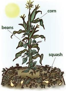 how to get more air in compact soil weed