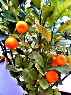oranges 365-project