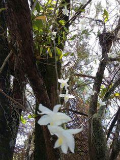 Orquídea na árvore
