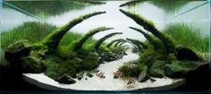 アクアリウムの世界 美しい水槽レイアウト集 | ギャザリー