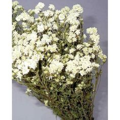 Dried Pearly Everlasting flowers are a bright addition to flower arrangements, bouquets, garlands, swags, centerpieces and wreaths. Naturally dried, these cute flowers will last for a long time. #pearlyeverlasting #driedflowers #weddingbouquet #homedecor #centerpieces #summerdecor #summerwedding #flowerarrangement