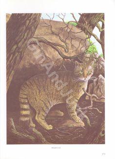 VINTAGE CAT PRINT Animal Print 1970s Cat Print Cat by GinAndJunk Vintage Cat, Antique Books, Animal Prints, Habitats, 1970s, Looks Great, Kitten, Lion Sculpture, Colours