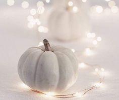 Mini Pumpkins, White Pumpkins, Halloween Pumpkins, Ghost Cake, Halloween History, Baby Shower Fall, Hello Autumn, Cute Halloween, Themed Cakes