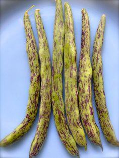CLEARANCE SALE Rattlesnake Pole Bean Organic by kenyonorganics