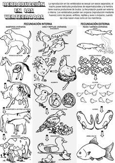 la reproducción en los vertebrados