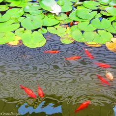 How to make a floating flower pot for a pond ehow for Koi pond hiding places