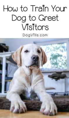 Dog Obedience Training - CLICK THE IMAGE for Various Dog Care and Training Ideas. #doglovers #dogtraining