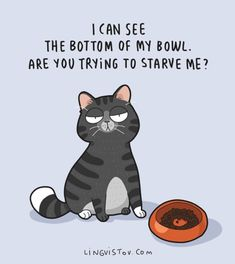 My cats will act like they're starving right after I've fed them. I feed them extra, too! Funny Cats, Funny Animals, Cute Animals, Funny Horses, 9gag Funny, Humour Wtf, Cats Humor, Crazy Cat Lady, Crazy Cats