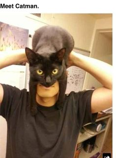 Another Catman