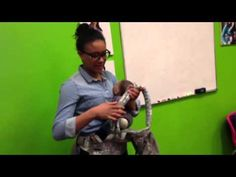 Metro Minis Babywearing How-To || Properly Adjusting your Ergo (or any other soft structured carrier with H-shaped straps) || YouTube