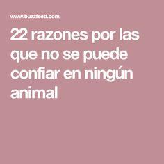 22 razones por las que no se puede confiar en ningún animal